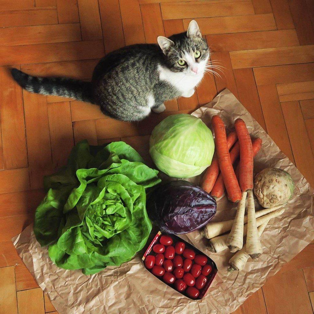 slovenská zelenina